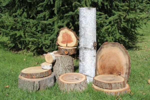 Assorted Wood Slices & Logs