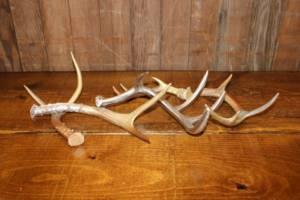 Metallic Antlers