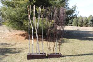 Birch & Twig Stands